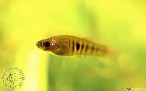 Rybky z vlastních akvárií, archiv